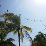 Fas 3 för Costa del Sol och Costa Tropical