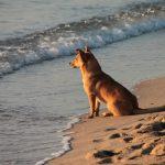Åtta stränder för hundar på Costa del Sol