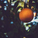 Apelsintorget görs om, plan för fler vårdcentraler och förhoppning om att starta turismen till påsk